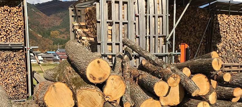 山形県朝日連峰付近より伐採した楢木の原木
